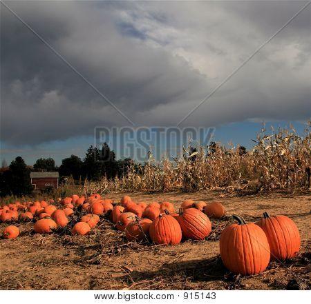 Storm Over The Pumpkin Patch