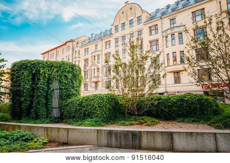 Hedge Ivy on a street in Helsinnki