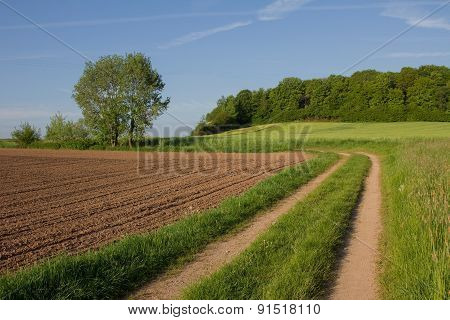 Country Lane Through Farmland