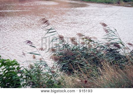 Water Patch Copia