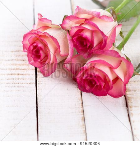Postcard With Elegant  Flowers In Ray Of Light  And Empty Place For Your Text