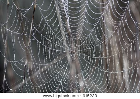Dewdrops Covered On The Spiderwebs