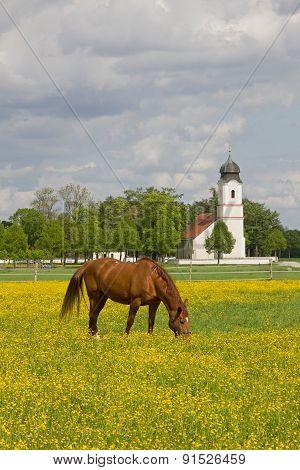 Grazing Horse In Buttercup Meadow, Church Building