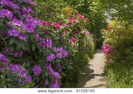 Rhododendrons In Various Colors