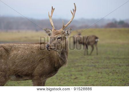 Portrait of a deer in a field