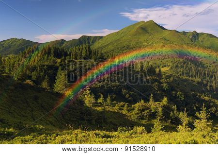 Mountain landscape with a rainbow. Fir forest