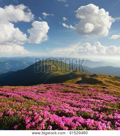Summer landscape. Flowers in the mountains. Beauty in nature. Sunny day