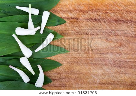 wild garlic Allium tricoccum on wood background