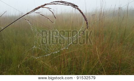 Dewdropped Spiderweb