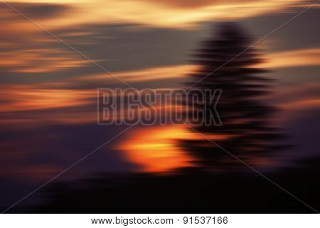Blurred Sunset Clouds And Pine Tree
