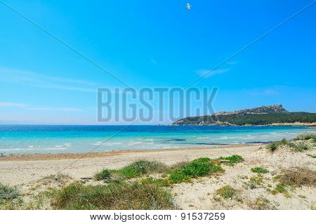 Turquoise Water And Green Plants In Capo Testa