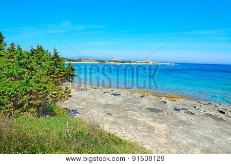 Grey Rocks And Green Plants By Capo Testa Shoreline