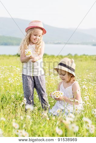 Two Happy Little Girls Collect Daisies