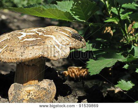 fly sat down on a mushroom