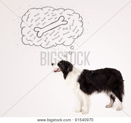 Cute black and white border collie dreaming about a bone in a thought bubble