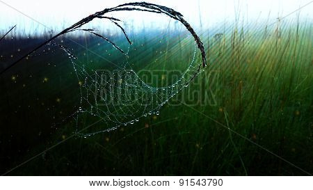 Spiderweb In Green