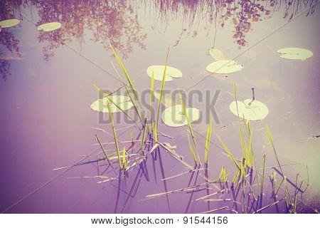 Vintage Filtered Nature Background.