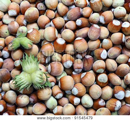 Background Of The Plurality Of Hazelnut
