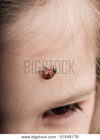 Ladybird Bug Walking Across Forehead Of A Girl With Downwards Angle
