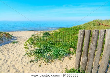 Green Plants And White Sand In Rena Majore Beach