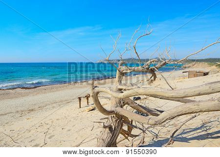 Dry Branch By The Shore In Rena Majore