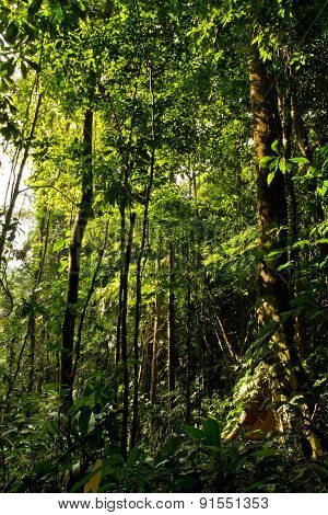 Beautiful green landscape in the amazon rainforest, Yasuni National Park, Ecuador