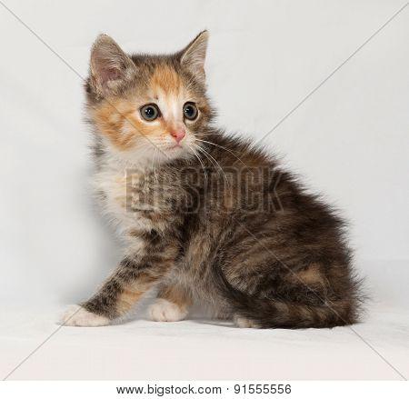 Tricolor Fluffy Kitten Sitting On Gray