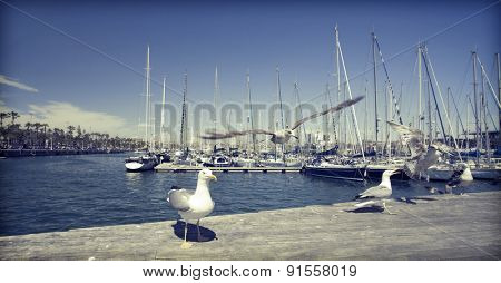 Seagull in the port - old styled photo