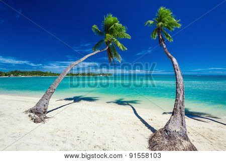 Palm trees hanging over stunning lagoon with blue sky in Fiji