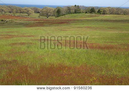 Farm land on Martha's Vineyard