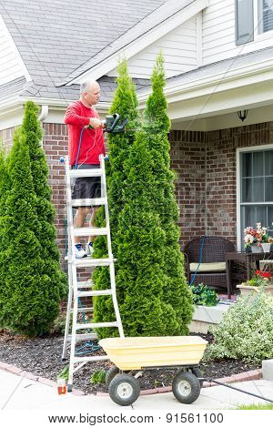 Senior Man Cutting Thuja Using Hedge Trimmer