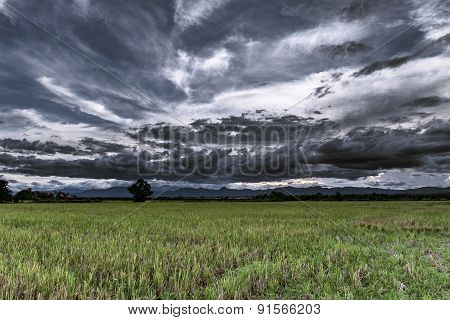 Storm Clouds Before Rainy And Field Meadow
