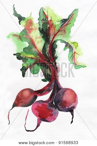 image of beet root on white background.