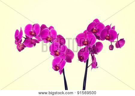 Beautiful violet orchids, houseplant, decoration
