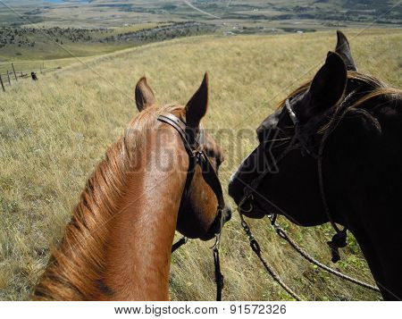 two horses taking a breather