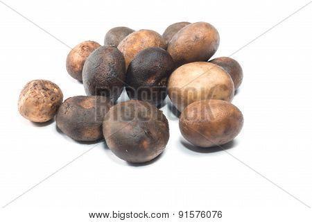 Mushroom - Barometer Earthstars