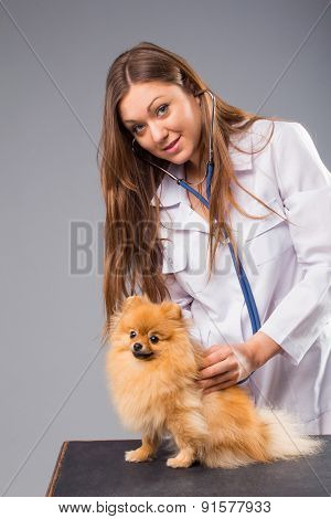 Smiling Female Vet With Phonendoscope Holding Cute Pomeranian Dog