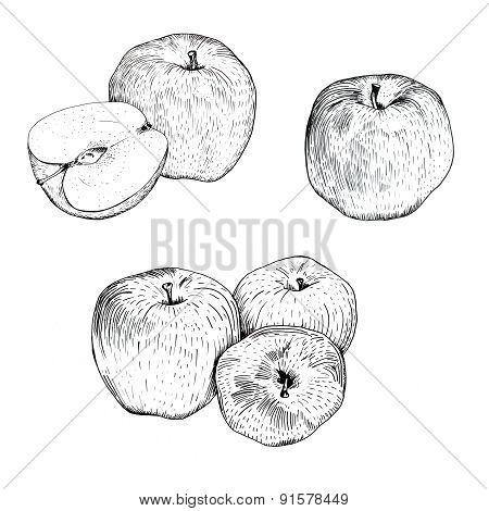 Ink apple sketches set