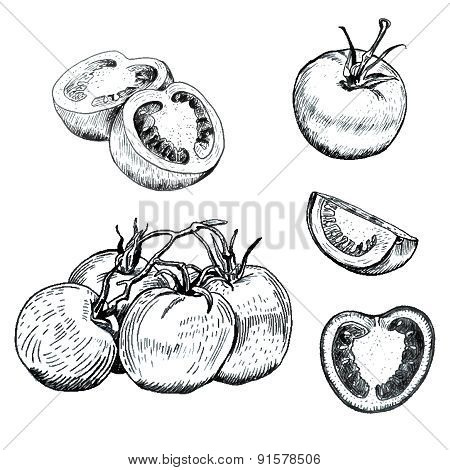Ink tomatoes sketches set