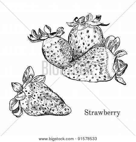 Hand drawn strawberry ink sketch.