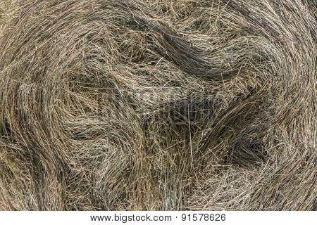 Backgrounf Hay