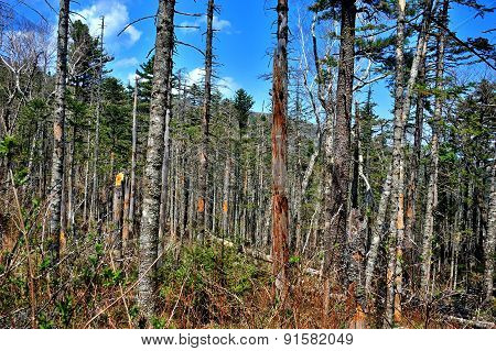 Beautiful Dry Forest Landscape