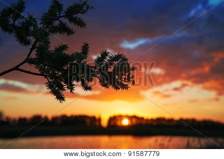The Sun Behind The Branch.