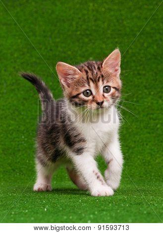 Cute little kitten playing on artificial green grass