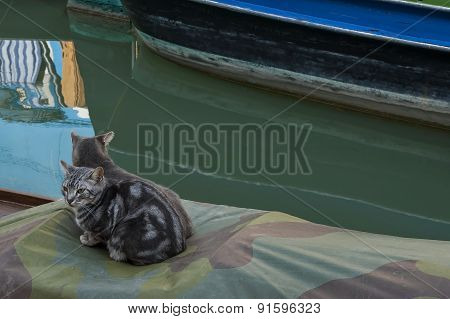 Two cats sitting on a shutter of boat  in Burano island