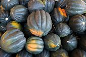 stock photo of acorn  - ripe harvested acorn squash at the martket place - JPG