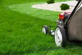 picture of lawn grass  - Photograph of lawn mower on lash green grass - JPG