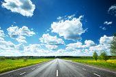 picture of dandelion  - Asphalt road and dandelion field on synny day - JPG