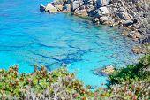 picture of shoreline  - rocks and plants by Capo Testa shoreline Sardinia - JPG