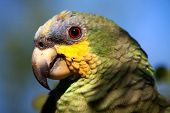 image of rainforest  - Close up shot of green parrot in the amazon rainforest - JPG